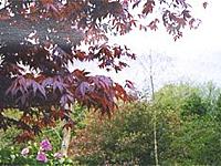 Lower Bradford Sculpture Garden